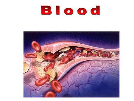 White blood cells Platelets Red blood cells Artery.