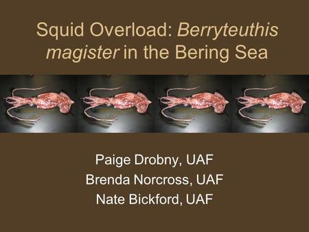 Squid Overload: Berryteuthis magister in the Bering Sea Paige Drobny, UAF Brenda Norcross, UAF Nate Bickford, UAF.