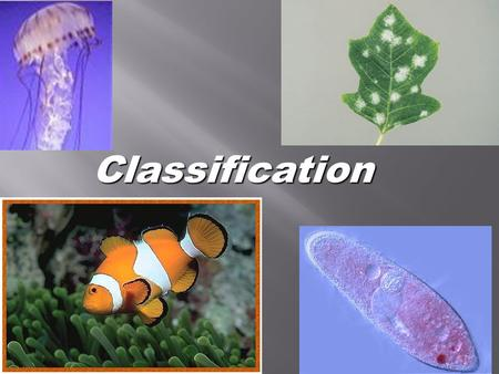 Classification Go to Section:.  The basic unit of an animal is the cell.  A cell is the smallest unit of any animal or plant. Some animals are one celled,