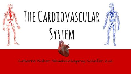 The Cardiovascular System Catherine Walker, Mikaela Echegaray, Schiefer, Zoe.