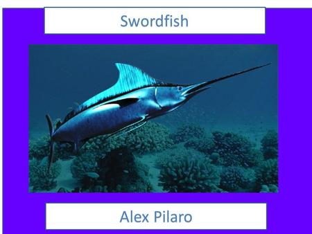 Swordfish AlexPilaro Alex Pilaro AnimalFacts Animal Facts Description The swordfish colors are brown to camouflage with rocks, grey to camouflage in.
