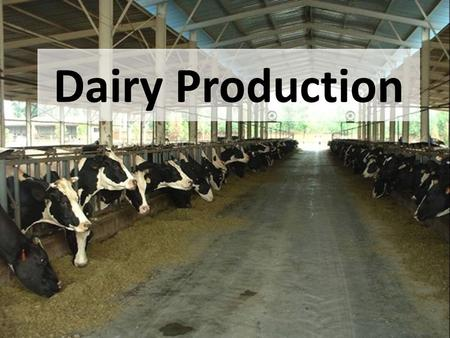 Dairy Production. Objectives A.Explain the importance of the dairy industry; B.Define terms associated with dairy production C.List 7 breeds of dairy.