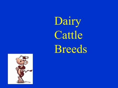 Dairy Cattle Breeds. Ayrshire Scotland; known for vigor and health; average milk production Only 18,000 in the U.S.