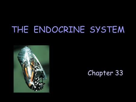 Chapter 33 THE ENDOCRINE SYSTEM. The endocrine system: ] interacts with the nervous system to maintain homeostasis. ] consists of endocrine glands & isolated.