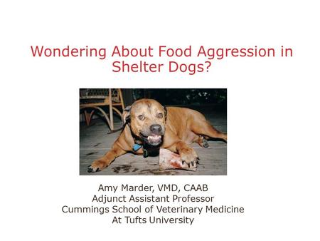 Wondering About Food Aggression in Shelter Dogs? Amy Marder, VMD, CAAB Adjunct Assistant Professor Cummings School of Veterinary Medicine At Tufts University.
