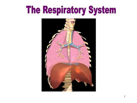 1 Respiratory System 2 Objectives After studying this chapter, you will be able to: Name the parts of the respiratory system and discuss the function.