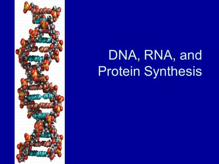 DNA, RNA, and Protein Synthesis. What is DNA? DNA- Deoxyribonucleic Acid Function is to store and transmit hereditary information. In prokaryotes- located.