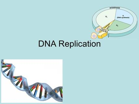 DNA Replication Functions of DNA 1. Replication – Occurs before Mitosis and meiosis only Produces an exact copy of DNA 2. Transcription – DNA makes mRNA.