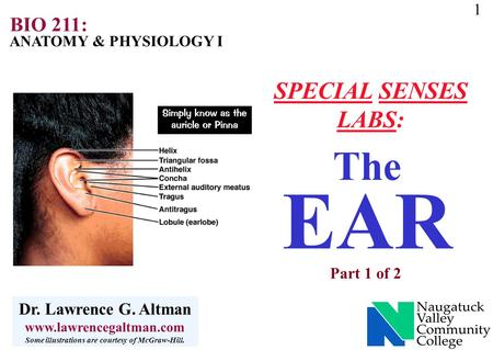 1 ANATOMY & PHYSIOLOGY I BIO 211: Dr. Lawrence G. Altman www.lawrencegaltman.com Some illustrations are courtesy of McGraw-Hill. The EAR Part 1 of 2 SPECIAL.
