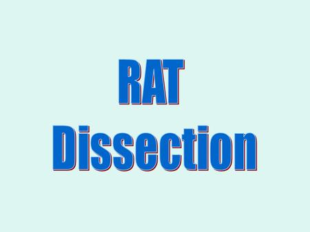 General Procedures and Dissection Graded Lab Procedures include: –The maintenance of tray and tools which includes cleaning at the end of each lab period.