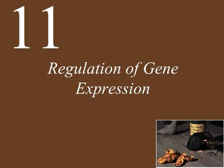 Regulation of Gene Expression 11. Concept 11.1 Several Strategies Are Used to Regulate Gene Expression Gene expression is tightly regulated. Gene expression.