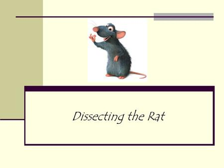 Dissecting the Rat. Introduction to Mammals Of all the classes of animal life, mammals are considered to be the most advanced. Examples: dogs, cats, squirrels,