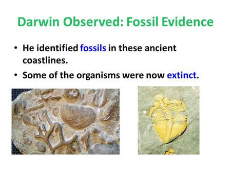 Darwin Observed: Fossil Evidence He identified fossils in these ancient coastlines. Some of the organisms were now extinct.