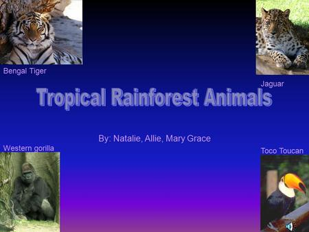 By: Natalie, Allie, Mary Grace Western gorilla Toco Toucan Bengal Tiger Jaguar.