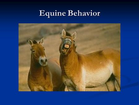 Equine Behavior. What Affects Behavior? Environment Experiences Experiences Diet Diet Exercise Exercise Stress Stress Genetics Gender Type Breed Family.