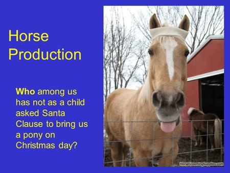 Horse Production Who among us has not as a child asked Santa Clause to bring us a pony on Christmas day?
