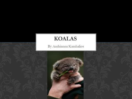 By Andrianna Karahalios. A koala is a marsupial. It gives birth to live young. ANIMAL GROUP.