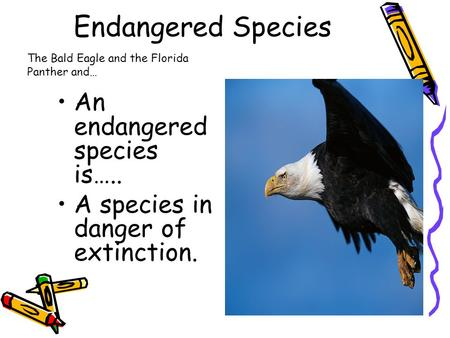 Endangered Species An endangered species is….. A species in danger of extinction. The Bald Eagle and the Florida Panther and…