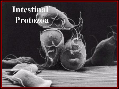 Intestinal` Protozoa. Resources on Parasitology  Centre for Disease Control and Prevention (CDC) :