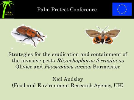 Palm Protect Conference Strategies for the eradication and containment of the invasive pests Rhynchophorus ferrugineus Olivier and Paysandisia archon Burmeister.