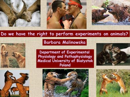 Do we have the right to perform experiments on animals? Barbara Malinowska Department of Experimental Physiology and Pathophysiology Medical University.