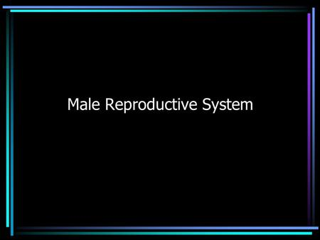 Male Reproductive System. DO NOW Write down as many parts of the male reproductive system as you can on the worksheet provided.