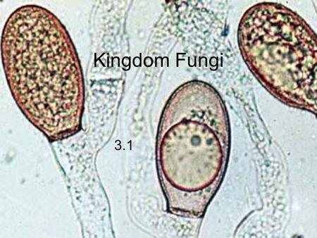 Kingdom Fungi 3.1. What are Fungi? Similarities to Plants multicellular eukaryotes mostly sessile many fungi also grow in the ground.
