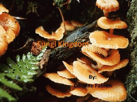 Fungi Kingdom By: Corinne Fabien. What is a Fungus Kingdom? A fungus (also pronounced fungi or funguses) is a large group of eukaryotic (organism cells.