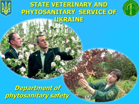 Department of phytosanitary safety STATE VETERINARY AND PHYTOSANITARY SERVICE OF UKRAINE.
