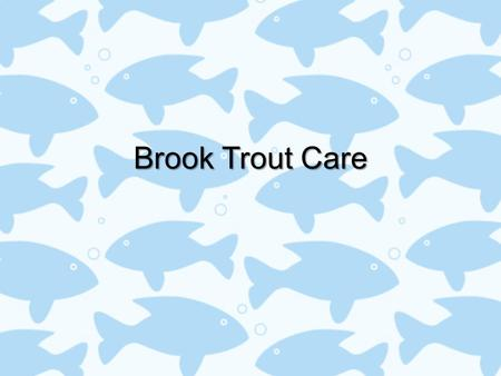 "Brook Trout Care. Basic Daily Care Provide a ""stress free' environmentProvide a ""stress free' environment –Keep all insulation on except the front and."