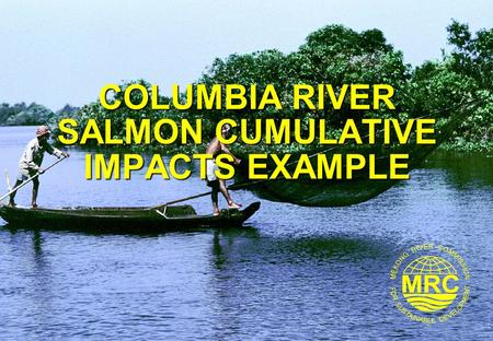 COLUMBIA RIVER SALMON CUMULATIVE IMPACTS EXAMPLE.