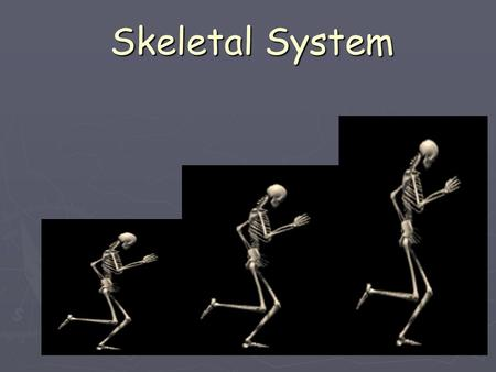 Skeletal System. The Skeletal System in Action !! ► The Skeletal System in Action! The Skeletal System in Action!