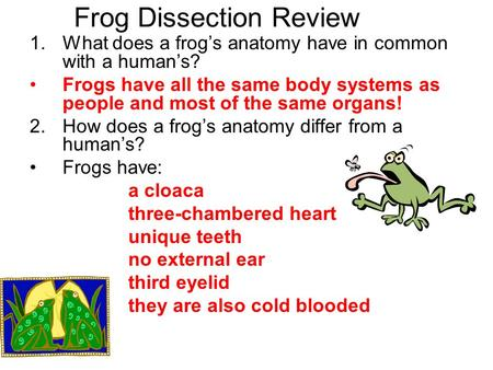 Frog Dissection Review 1.What does a frog's anatomy have in common with a human's? Frogs have all the same body systems as people and most of the same.