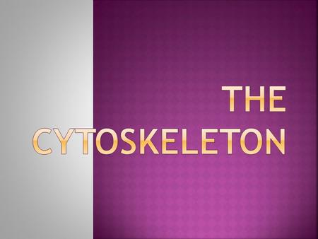  The cytoskeleton is a network of fibers that organizes structures and activities in the cell. It is cellular skeleton contained within a cell's cytoplasm.