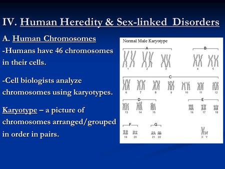 IV. Human Heredity & Sex-linked Disorders A. Human Chromosomes -Humans have 46 chromosomes in their cells. -Cell biologists analyze chromosomes using karyotypes.