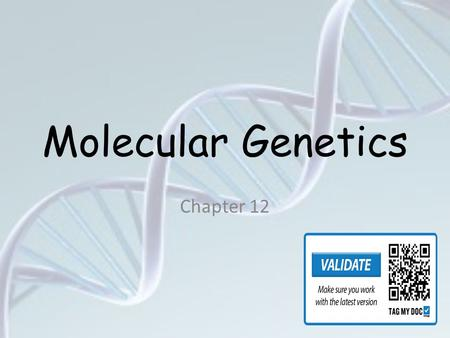 Molecular Genetics Chapter 12 DNA 3 4 DNA DNA. DNA is often called the blueprint of life. In simple terms, DNA contains the instructions for making.