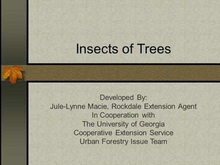 Insects of Trees Developed By: Jule-Lynne Macie, Rockdale Extension Agent In Cooperation with The University of Georgia Cooperative Extension Service Urban.