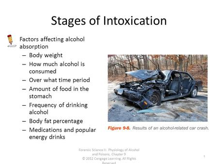 Stages of Intoxication Factors affecting alcohol absorption – Body weight – How much alcohol is consumed – Over what time period – Amount of food in the.