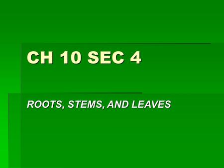 CH 10 SEC 4 ROOTS, STEMS, AND LEAVES. ROOTS  KEY- ROOTS ANCHOR A PLANT TO THE GROUND, ABSORB H2O AND MINERALS FROM THE SOIL, AND SOMETIMES STORE FOOD.