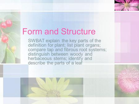Form and Structure SWBAT explain the key parts of the definition for plant; list plant organs; compare tap and fibrous root systems; distinguish between.