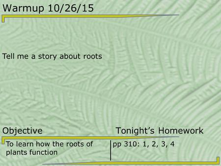 Warmup 10/26/15 Tell me a story about roots Objective Tonight's Homework To learn how the roots of plants function pp 310: 1, 2, 3, 4.