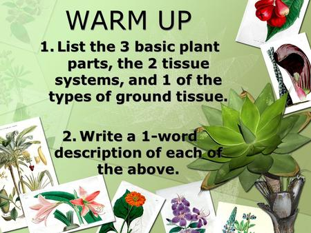 WARM UP 1.List the 3 basic plant parts, the 2 tissue systems, and 1 of the types of ground tissue. 2.Write a 1-word description of each of the above. 1.List.