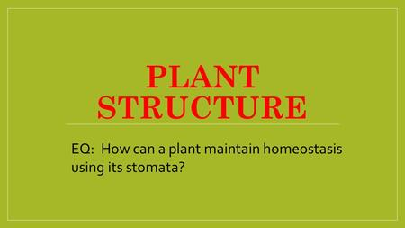 PLANT STRUCTURE EQ: How can a plant maintain homeostasis using its stomata?