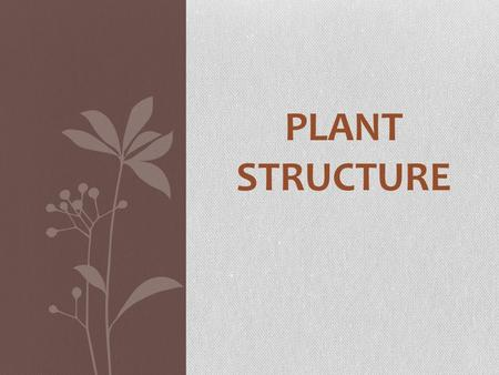 PLANT STRUCTURE. There are many types of plants…. We are going to focus on land plants: - they provide protection for their embryos which has increased.