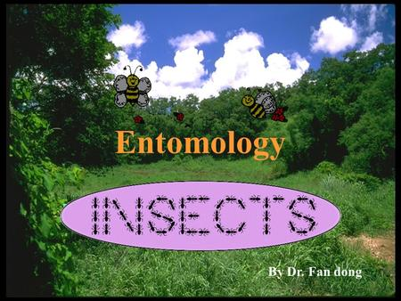 Entomology By Dr. Fan dong Insect Thorax prothorax  The thorax consists of three segments - the prothorax (front), the mesothorax (middle) and the metathorax.