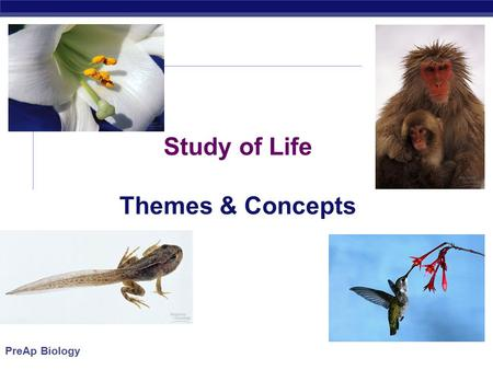 PreAp Biology Study of Life Themes & Concepts. PreAp Biology Age of Earth  About 4.5 bya  Life about 4 bya (Prokaryotes)  Photosynthesis about 2.7.