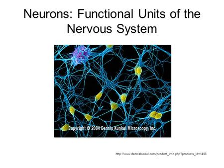 Neurons: Functional Units of the Nervous System
