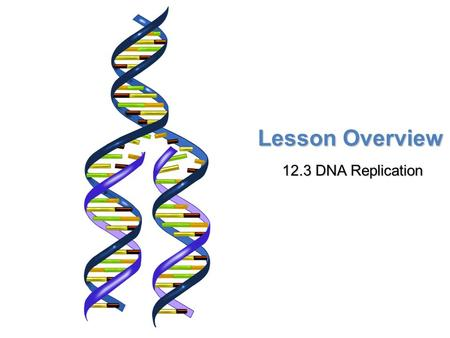 Lesson Overview 12.3 DNA Replication. Lesson Overview Lesson Overview DNA Replication THINK ABOUT IT Before a cell divides, its DNA must first be copied.