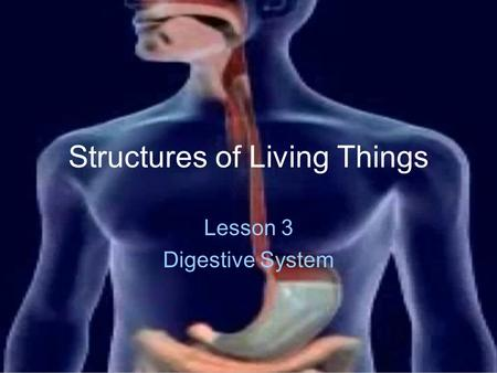 Structures of Living Things Lesson 3 Digestive System.