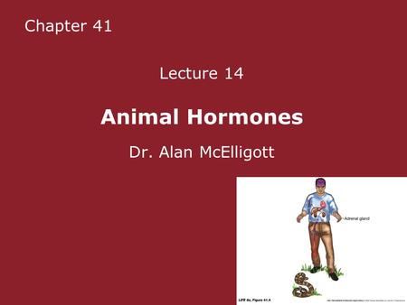 Chapter 41 Lecture 14 Animal Hormones Dr. Alan McElligott.